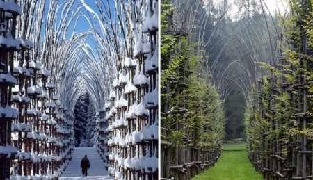 Удивительный собор из живых деревьев